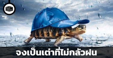จงเป็นเต่าที่ไม่กลัวฝน
